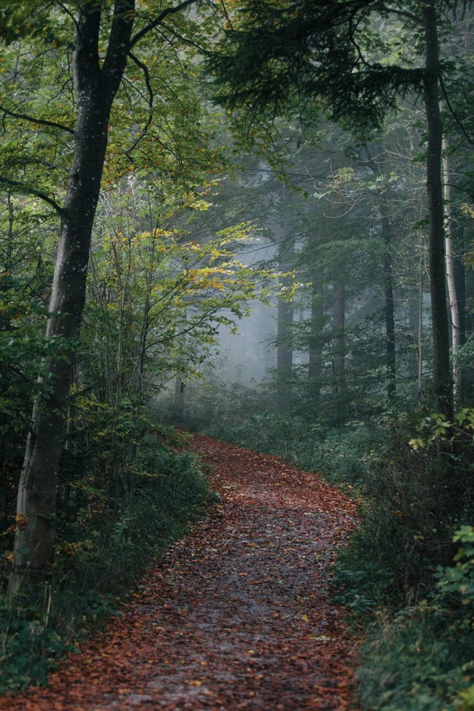 An inviting path winds through a shady forest. The quest for happiness begins here.