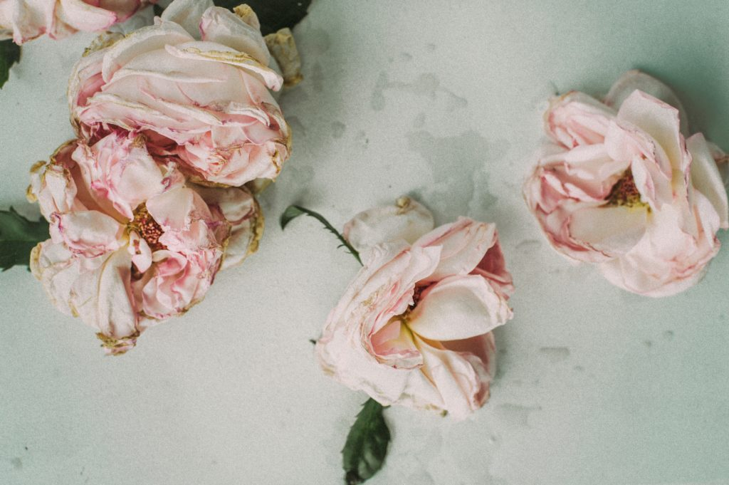Wilted roses.