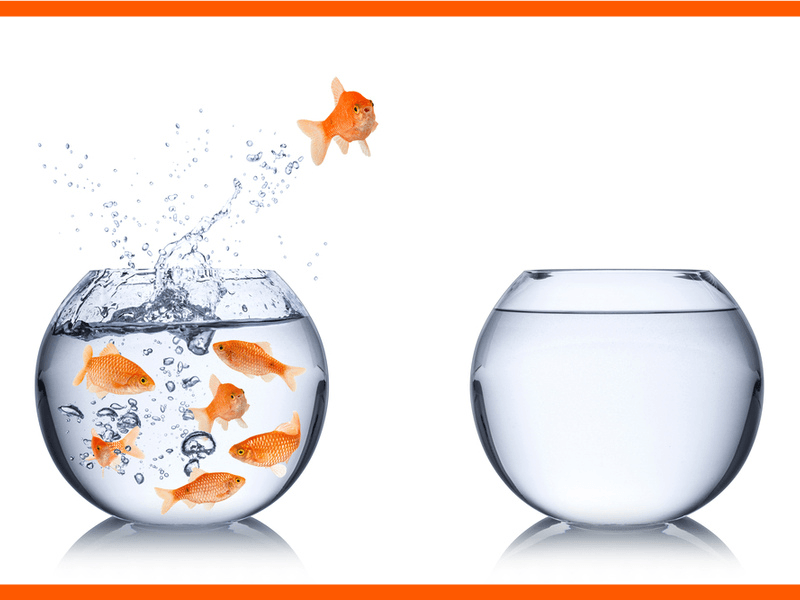 Another life lesson. A goldfish makes a fearless leap to a new bowl. Sometimes you need to take a risk and be fearless to find a solution.