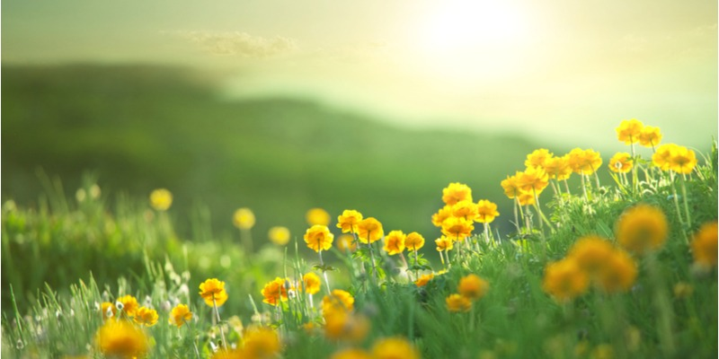 The early morning sun shines on a flower filled meadow. The beauty of nature brings the gift of joy.