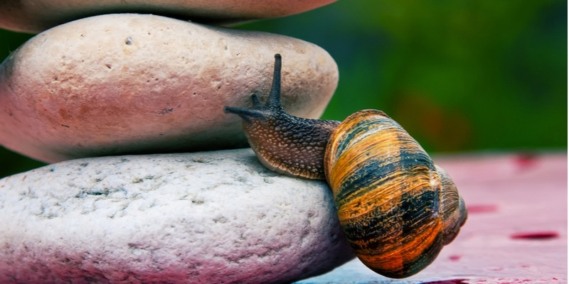 A colorful snail slowly creeps up a pile of rocks. The rocks, like procrastination and perfectionism, are obstacles in your way. Just start, action will follow.